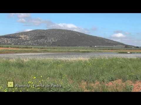 Grand Sentier de Málaga. Étape 17: Alameda - Fuente de Piedra ( français )
