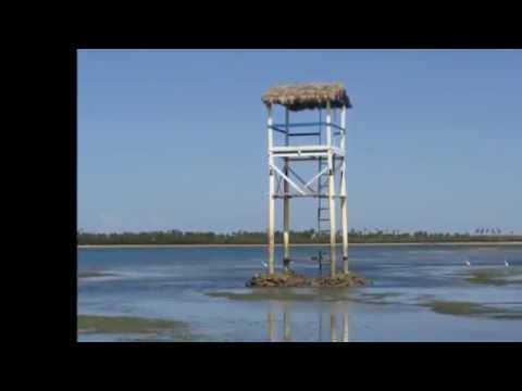 Peixe-Boi Cajueiro da Praia - Piauí
