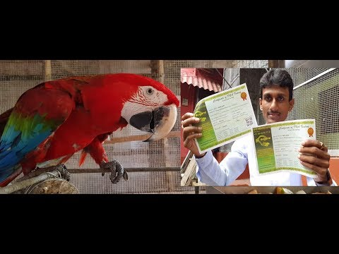 DNA Test of Birds and Parrots Part 3 Final / How to DNA Test of Birds and Parrots.