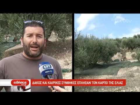Σε απόγνωση οι ελαιοπαραγωγοί στην Κρήτη | 18/11/2019 | ΕΡΤ