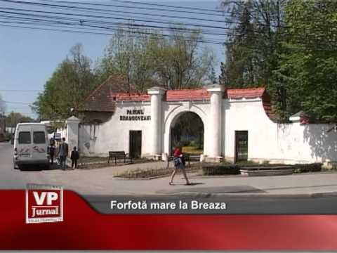 Forfotă mare la Breaza