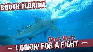 Video Dana White: Lookin' for a Fight – Season 4 Ep.2 MP3, 3GP, MP4, WEBM, AVI, FLV Juli 2019