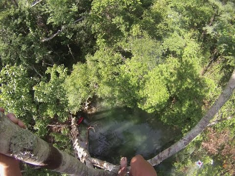 Guy Climb and Jump Off A 60Foot Tree