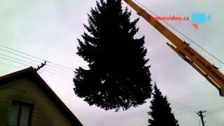 VIDEO DNE: Vánoční stromeček! Natočil Laky Bascur
