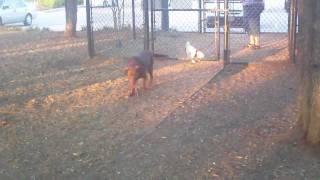 Dog Park in Allen, Texas
