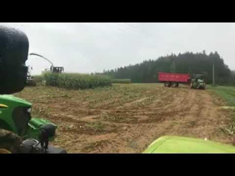 Puitava pelto kätkee yllätyksen