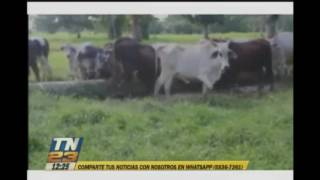 Alerta por contrabando de ganados a México