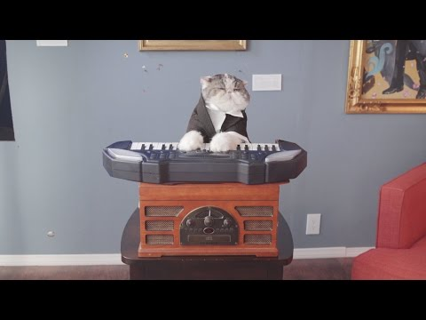 Aaron s Animals Classical Choir Cats