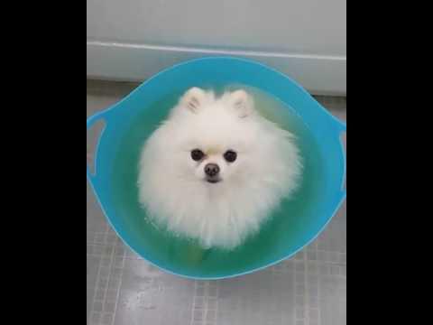 Fluffy Dog Enjoys Sitting in a Bath
