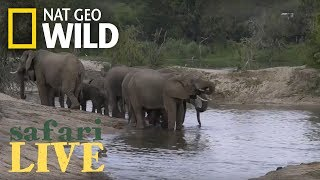Safari Live - Day 101 | Nat Geo Wild by Nat Geo WILD