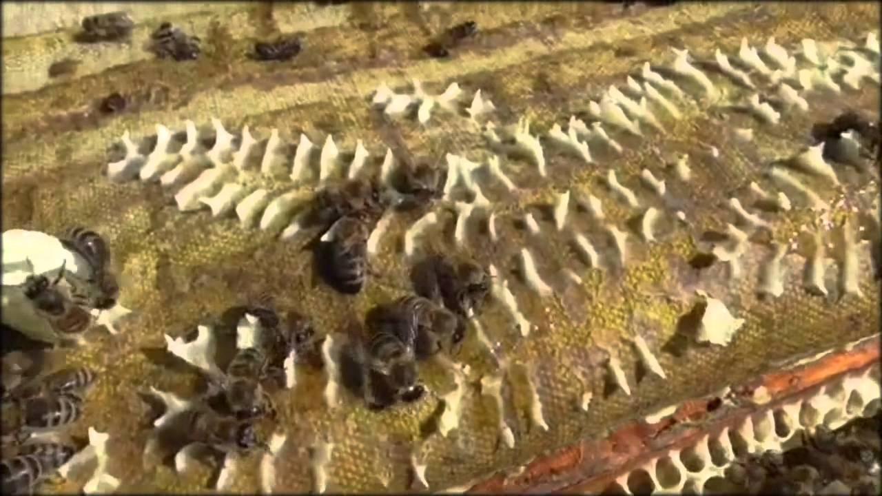 Пчеловодство. Смотреть онлайн: от цветка до мёда