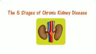 Learn the symptoms of chronic kidney disease at http://www.chronickidneydiseasetherapy.com. Stage 1: For the first stage, there is kidney damage with normal ...