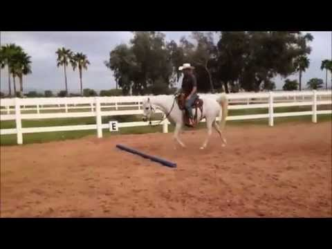 How to build your horses confidence with crossing an obstacle