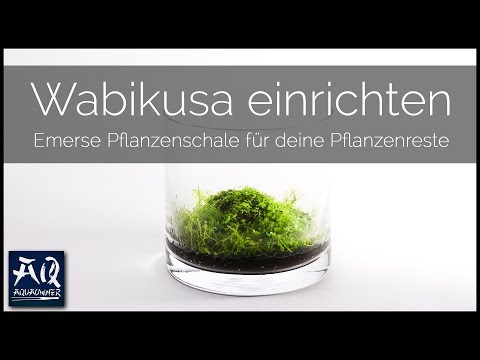 WABIKUSA EINRICHTEN   Schritt für Schritt zur eigenen Pflanzenschale   AquaOwner