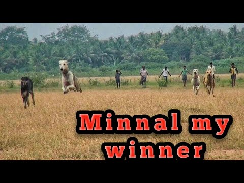 Video Kanni Dog  trial Race download in MP3, 3GP, MP4, WEBM, AVI, FLV January 2017