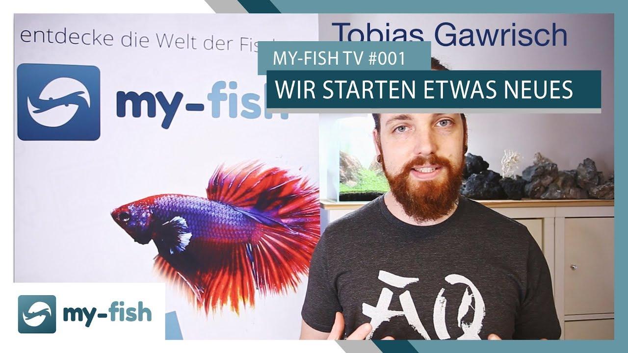 my-fish TV - Deine Nr. 1 Anlaufstelle für alle Themen rund um die Aquaristik 63