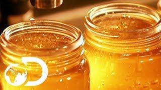 HONEY | How It's Made