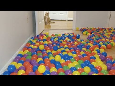 We turned our room into a ball pit for our cats!