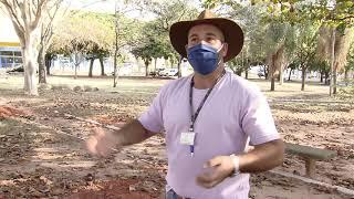 Formigueiro gigante toma conta de praça em Bauru