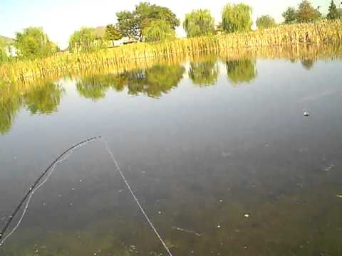 pond bass fishing part 4
