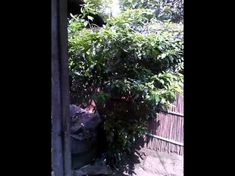 Download এক্সক্স HD Mp4 3GP Video and MP3