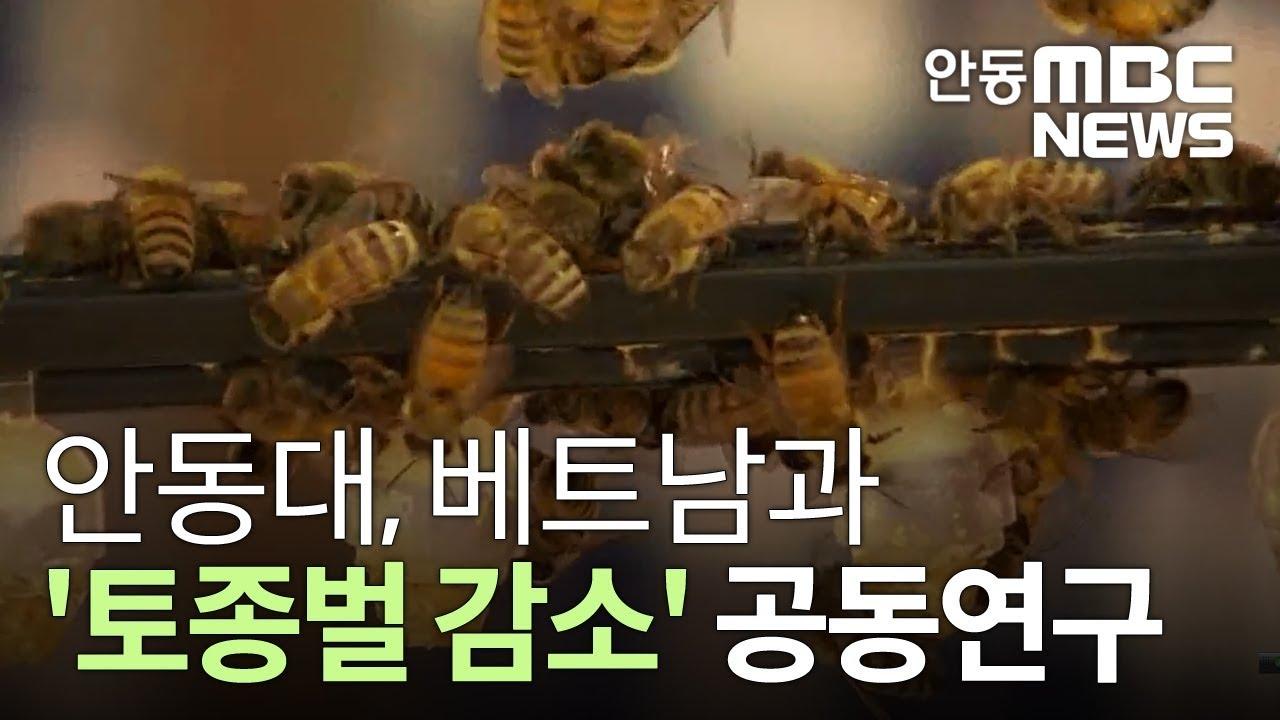 안동대, 베트남과 '토종벌 감소' 공동연구