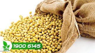 Trồng trọt | Cách ủ bột ngô và đậu tương làm phân bón