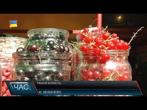 Корисні ягоди