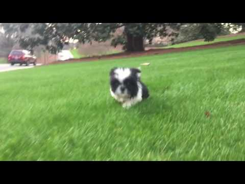 Baxter loves to run in the green winter grass after waking up from a nap