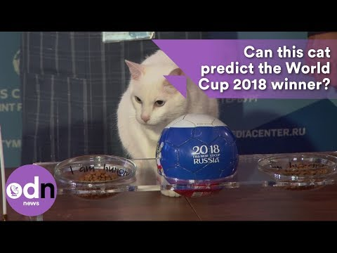 Can this cat predict the winner of the World Cup 2018?