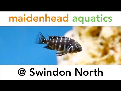 Stores Swindon North