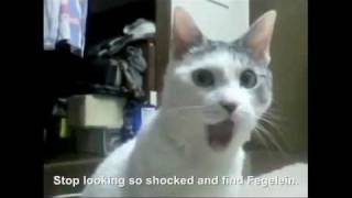 Hitler encounters the OMG Cat