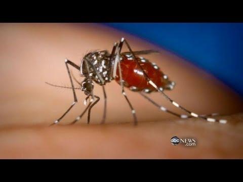 Asian Tiger Mosquito Invades California
