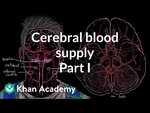 Cerebral Blood Supply Part 1 Video Khan Academy