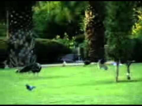 Parque de la Paloma - Animales Video