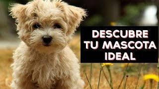 Cuál es tu mascota ideal? Descubre que mascota es ideal para ti y tu personalidad con este divertido test! ↠↠ ¡No te olvides de suscribirte para no perderte ...