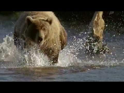 Wild Russia - 1 - Kamchatka (Россия: От Края До Края - Камчатка) - 3/3
