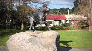 Hunterville New Zealand  city images : Huntaway in Hunterville - Roadside Stories