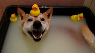 Cats and Dogs Just Don't Want to Bath 2014 [NEW HD]