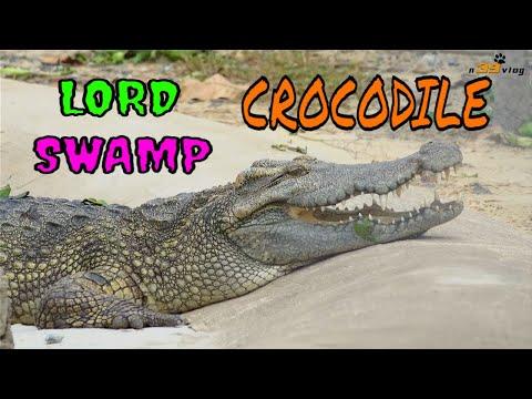 Con Cá Sấu - Live Dictionary