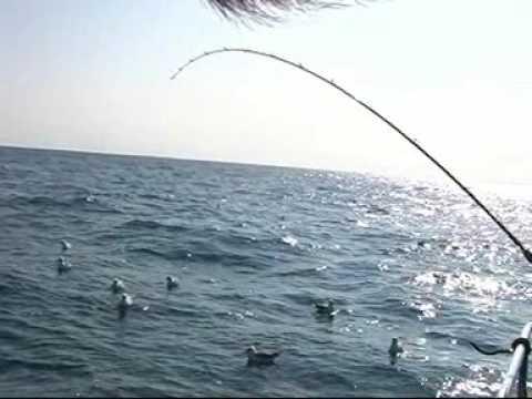 Sea angling fishing Dartmouth - Whiting, Turbot & Pollack_A valaha feltöltött legjobb horgász videók