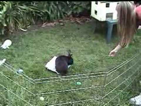 bunny - We hope you enjoy our collection of clicker trained rabbits doing amazing tricks.