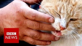 The cat man of Aleppo - BBC News