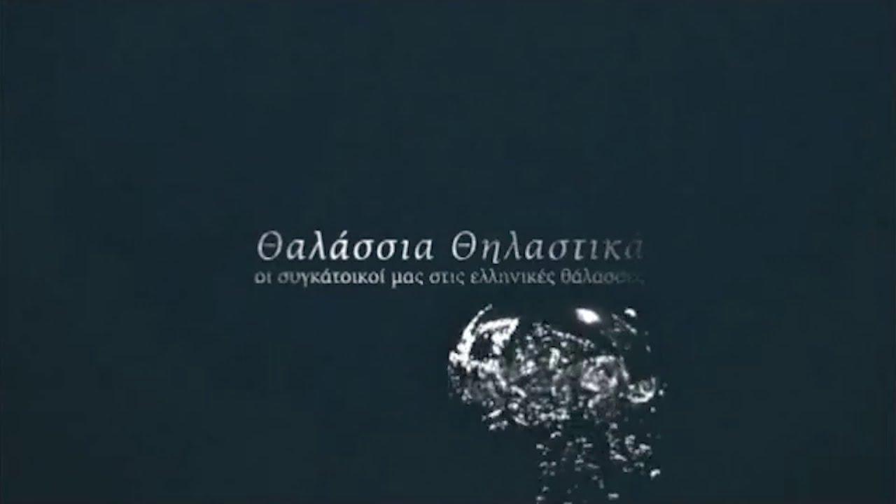 Θαλάσσια θηλαστικά, oι συγκάτοικοί μας στις ελληνικές θάλασσες