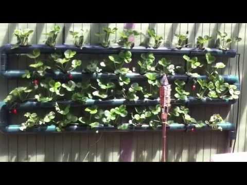 Strawberry Wall Idea