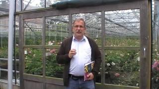 #100 Rosenzuechtung bei David Austin Roses - Viertes Video
