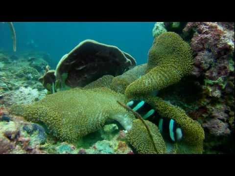 Gangga Divers @ Villa Almarik