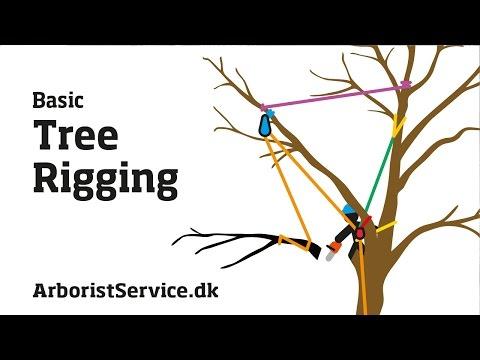 Tree Rigging Techniques - Baum Rigging - Nedfiring fra træ