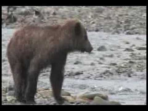 Bear of Magadan (видео)
