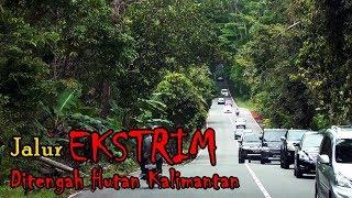 Video MENEMBUS HUTAN KALIMANTAN | Trip Perdana Balikpapan - Samarinda with PO Gelora MP3, 3GP, MP4, WEBM, AVI, FLV Oktober 2018
